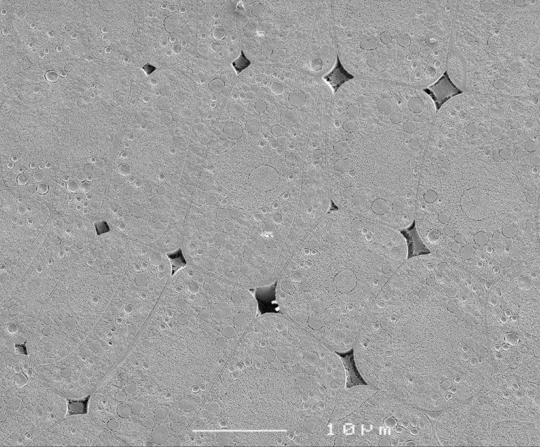 Cryoplaning SEM image of imbibed lettuce seed (Lactuca sativa). Image width is 58 µm. Photo by Jaap Nijsse.