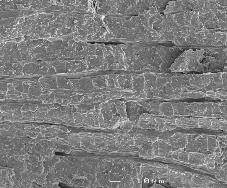Freeze fractured dry lettuce seed embryo. Method: SEM, longitudinal fracture, 10µm