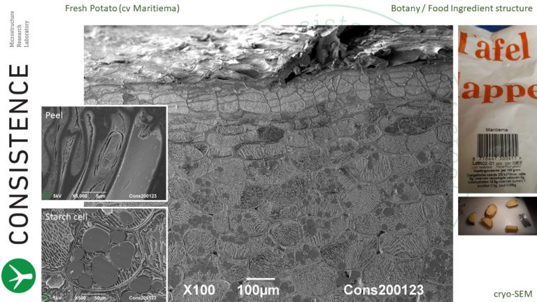 Cryoplaning SEM cross section of fresh potato. By Jaap Nijsse, Consistence Microstructure Research Laboratory.