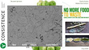 Cryoplaning SEM image of brussels sprouts puree. cryo-SEM. By Jaap Nijsse, Consistence Microstructure Research Laboratory.