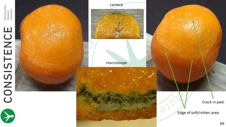 Spoiled Mandarin Orange. Photos by Jaap Nijsse. Consistence Microstructure Research Laboratory. Macroscope.