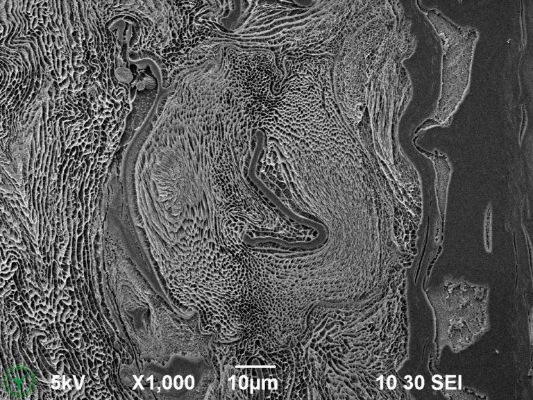Cryo-SEM image of external mucilage layer of an imbibed garden cress seed (Lepidium sativum). Image width is 130 µm. Photo by Jaap Nijsse. www.Consistence.nl.