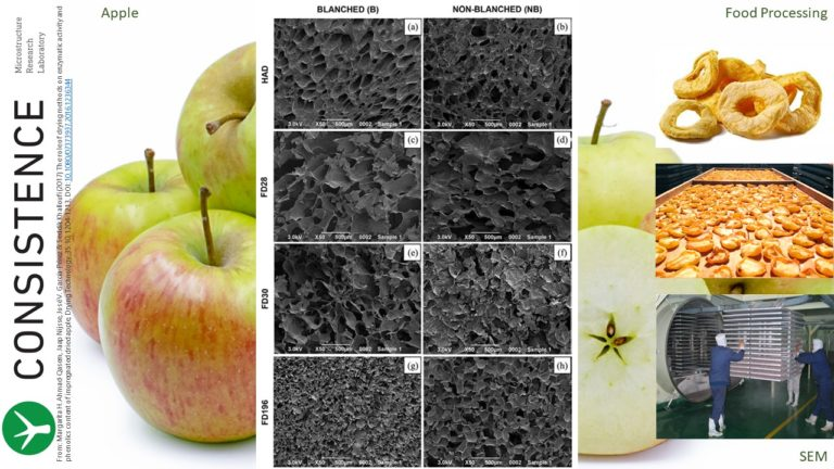 SEM images of freeze dried apple tissue. Drying Technology 35:10, 1204-1213.