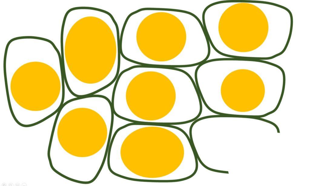 oil captured in cells