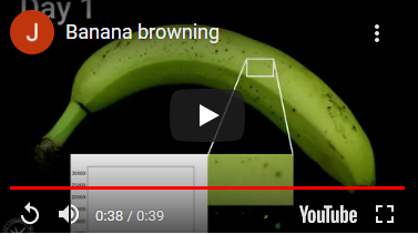 Banana browing timelapse