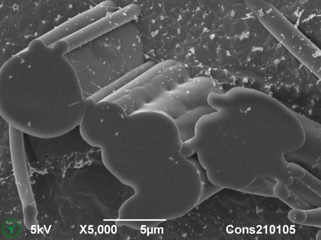 Face Mask Filter Cross Section SEM Microscopy 5000x